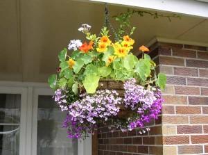 цветы для северных балконов