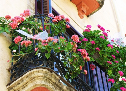 Какие цветы посадить на балконе: наименования растений.