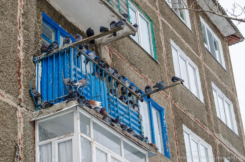 Как избавиться от голубей на балконе: методы.